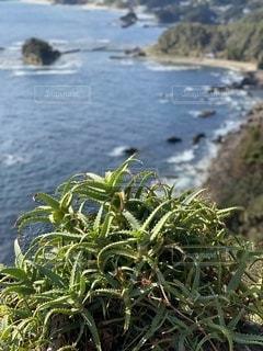 アロエ越しの海の写真・画像素材[2739872]
