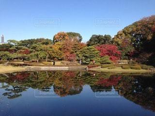 皇居東御苑の写真・画像素材[95379]