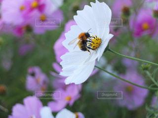花のクローズアップの写真・画像素材[3201782]