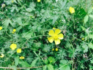 自然の写真・画像素材[112142]