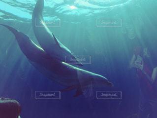 女性,恋人,2人,学生,夏,動物,イルカ,水,水族館,哺乳類,ドルフィン