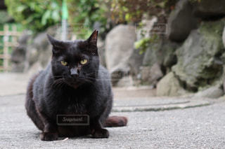 猫の写真・画像素材[142601]