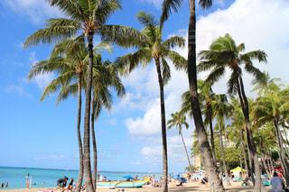 ハワイの写真・画像素材[990298]