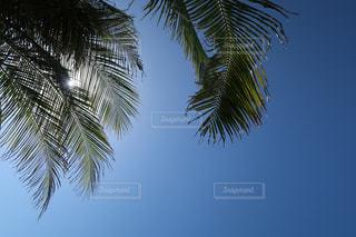 空の写真・画像素材[1827449]