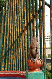 塀の上に座る鳥の写真・画像素材[2131062]