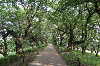 公園の木の写真・画像素材[2299844]