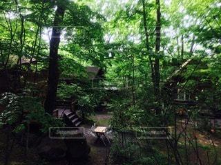 おしゃれキャンプ - No.95033