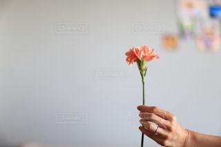 花を持つ手の写真・画像素材[2459582]