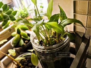 窓辺の観葉植物の写真・画像素材[2467843]