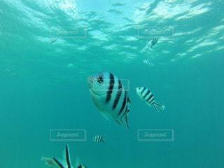 海の写真・画像素材[110140]