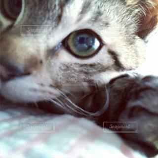 猫と添い寝の写真・画像素材[1716377]