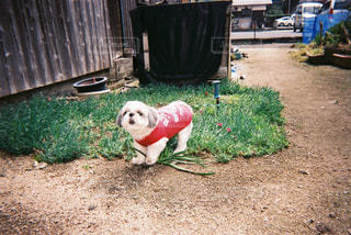 可愛い子犬の写真・画像素材[2460872]