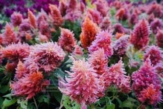 花をクローズアップするの写真・画像素材[2684499]