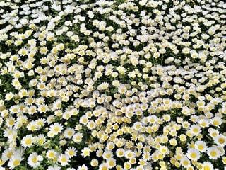 花をクローズアップするの写真・画像素材[2770920]