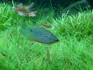 草の中の魚の群しの写真・画像素材[2461945]