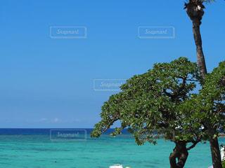 沖縄の海の写真・画像素材[2467940]