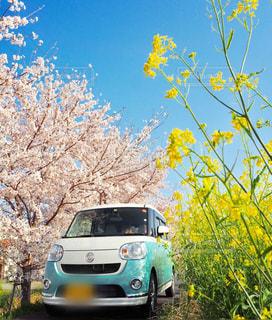 春色の写真・画像素材[2471239]