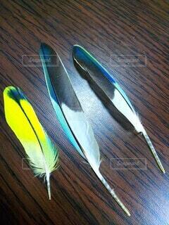 セキセイインコの羽の写真・画像素材[3763245]