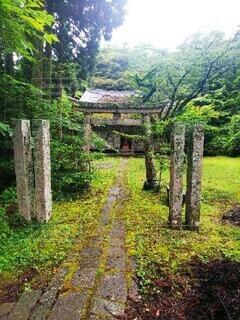 緑豊かな森の近くの写真・画像素材[3781132]