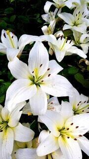 花のクローズアップの写真・画像素材[3790355]