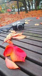 落ち葉とカメラの写真・画像素材[3861838]