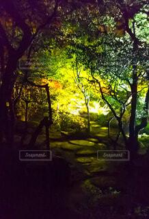 木のクローズアップの写真・画像素材[3863494]