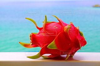 花の写真・画像素材[2471316]