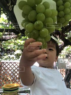 果物を持っている人の写真・画像素材[2466247]
