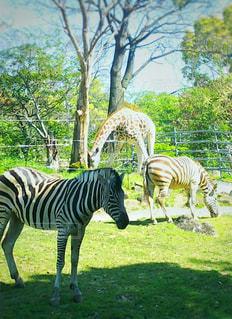 動物園の写真・画像素材[2476413]