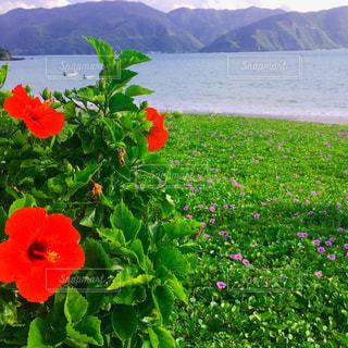 奄美大島の自然の写真・画像素材[2466418]