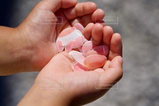 さくら貝を持つ子供の手の写真・画像素材[2503809]