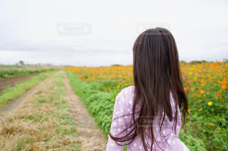 オレンジ色のコスモス畑と女の子の写真・画像素材[2512861]