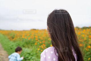 オレンジ色のコスモス畑と子供の写真・画像素材[2512862]