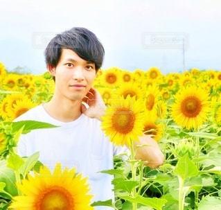 ひまわり畑と若い男性の写真・画像素材[2475875]