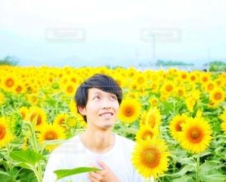 ひまわり畑で空を見上げる男性。の写真・画像素材[2475903]