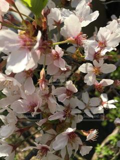 花のクローズアップの写真・画像素材[2466933]