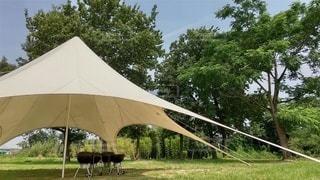 芝生とテントの写真・画像素材[3522455]