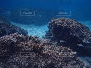 沖縄の海の写真・画像素材[2467338]