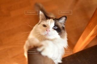 飛びつき猫の写真・画像素材[2467438]