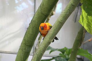 枝に座っている鳥の写真・画像素材[2467768]