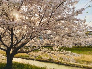 フィールドの木の写真・画像素材[3186094]