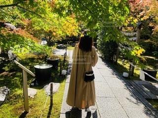 秋さんぽの写真・画像素材[3826867]