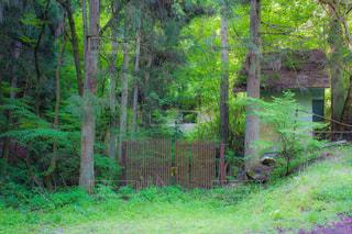 森の中の廃家の写真・画像素材[2479156]