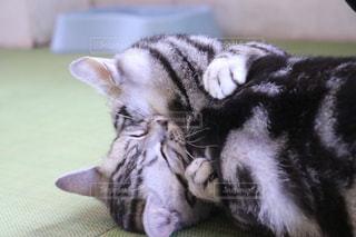 ハグ猫の写真・画像素材[2478911]