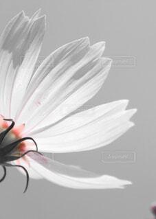 花のクローズアップの写真・画像素材[4381558]