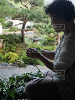 おばあちゃんとサツマイモのツルの写真・画像素材[2490355]