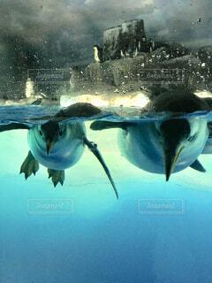ペンギンの写真・画像素材[3652685]