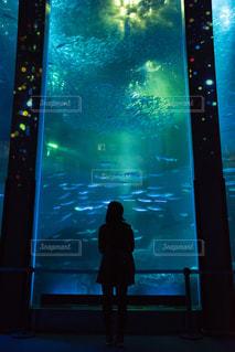 水族館の写真・画像素材[2702630]