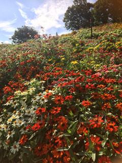 花園のクローズアップの写真・画像素材[2501714]