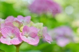 花の写真・画像素材[95395]